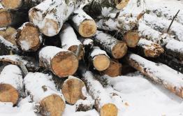 Лесничий и предприниматель нарубили леса на 6 млн рублей в Читинском районе