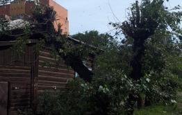 Энергосетевиков в Чите накажут за некачественную обрезку деревьев