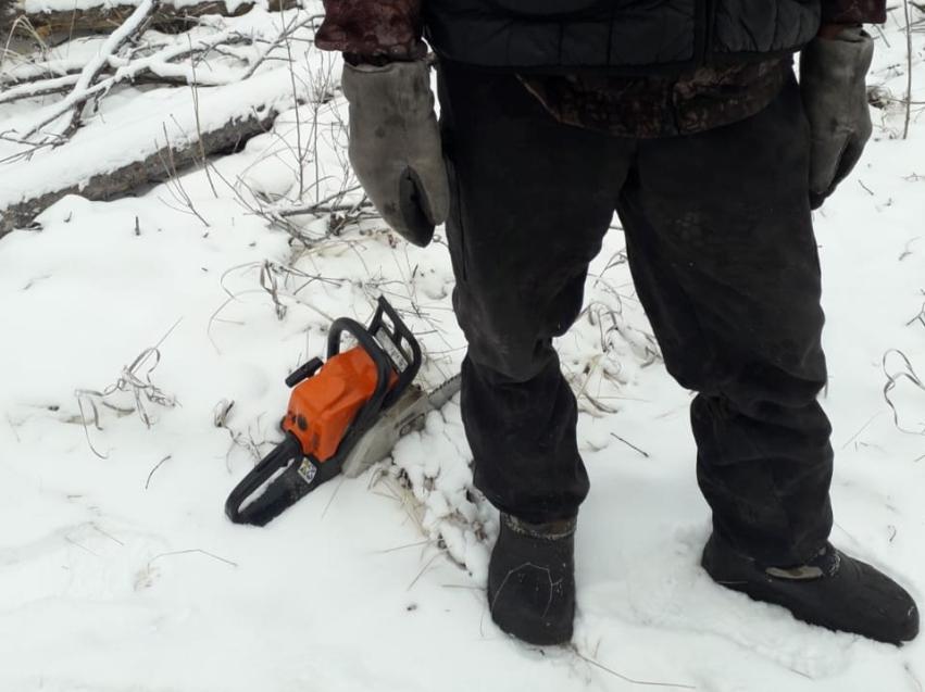 Забайкалец под видом валежника незаконно срубил деревья