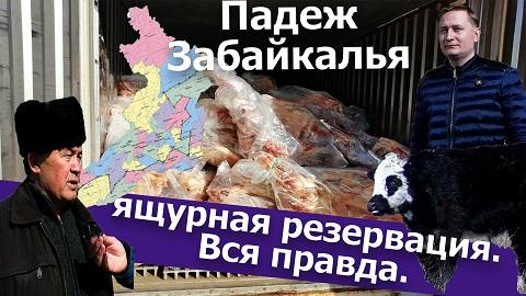 Вечорка ТВ: Падеж Забайкалья: ящурная резервация. Вся правда