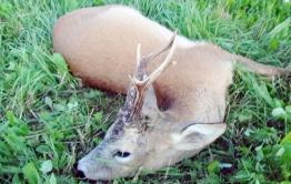 Две статьи грозит браконьерам, продававшим дичь в Забайкалье