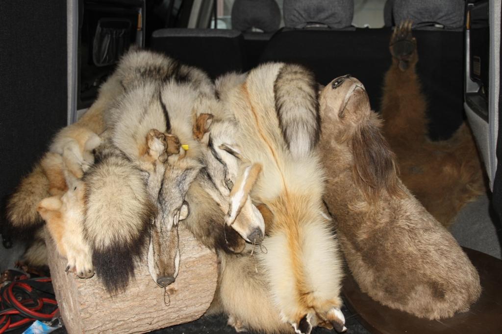 В Забайкалье заблокировали сайты с запрещенной информацией о торговле краснокнижными животными