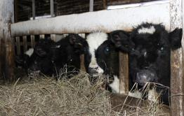 Чтобы накормить животных беклемишевский сельхозкооператив получит 702 тысячи рублей
