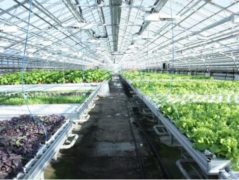 На Черновском овощеводе китайских рабочих заменили забайкальцы и узбеки