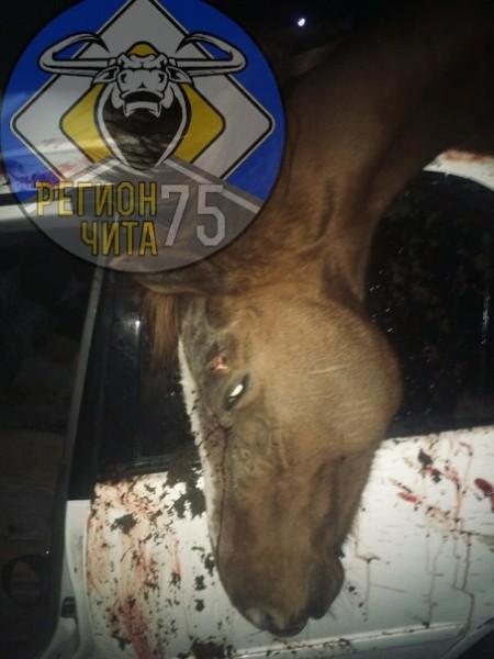 Машина врезалась в лошадь в Могойтуйском районе, водитель и пассажирка госпитализированы