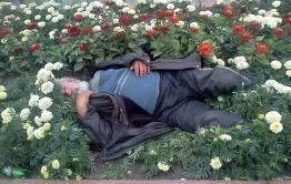 Пенсионера, по пьянке вырвавшего цветы из клумбы, арестовали на 13 суток