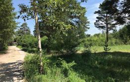Администрация Читинского района отдала 3,5 га лесозащитной зоны под «дальневосточный гектар»