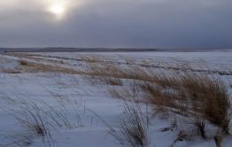 Пропавшая неделю назад женщина замёрзла насмерть в степи под Краснокаменском