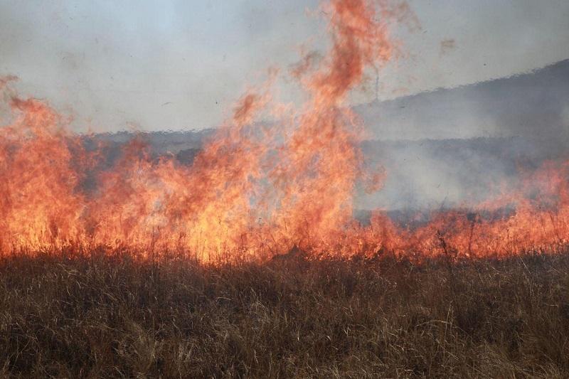 Противопожарный режим ЧС начал действовать в Забайкалье