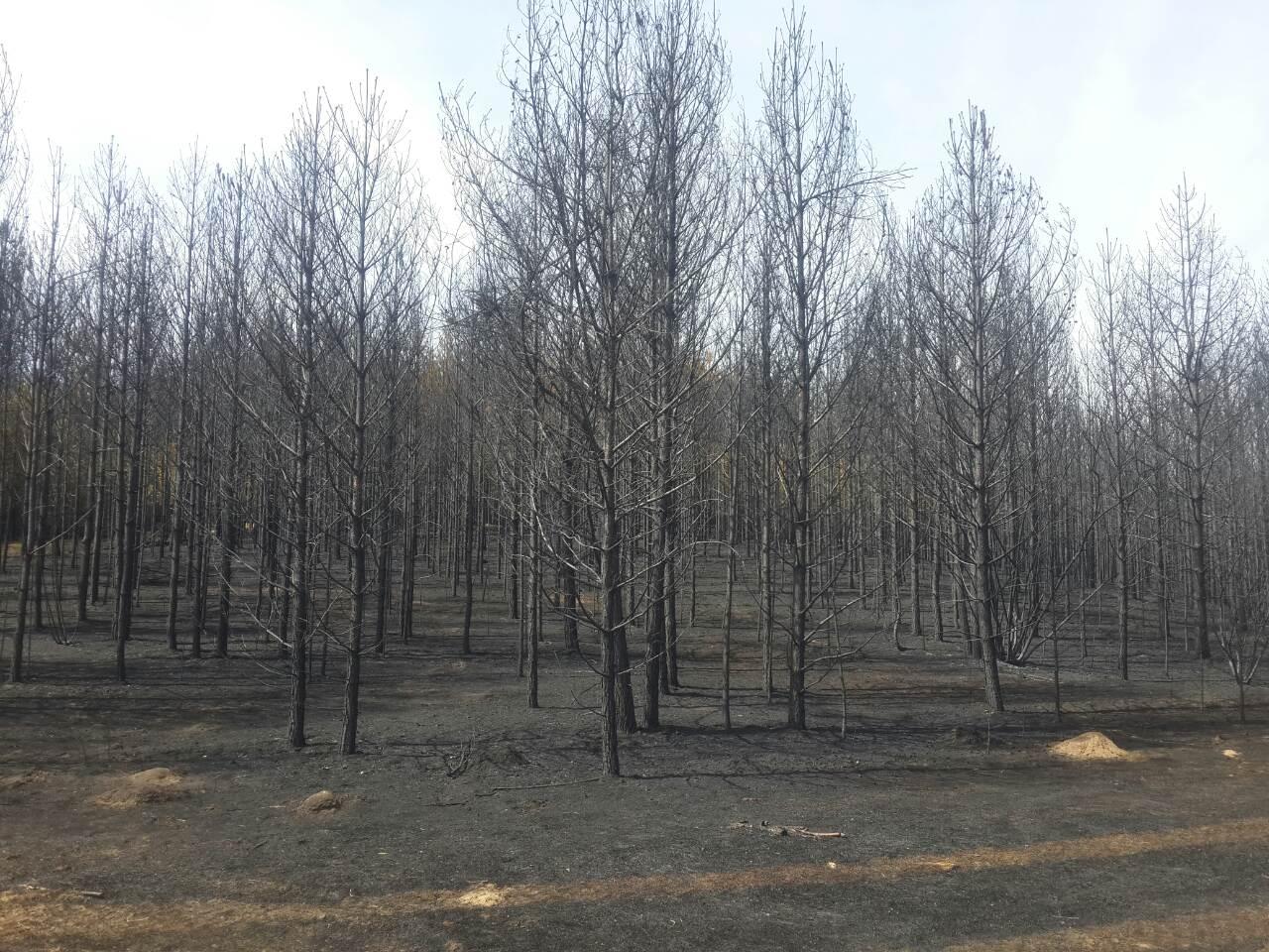 Лес погорел в Красночикойском районе