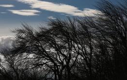 МЧС предупредило о сильном ветре и заморозках в Забайкалье