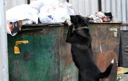В Минсельхозе обсудили проект приюта для животных