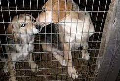 В Красночикойском районе организуют приют для бездомных собак по требованию природоохранной прокуратуры