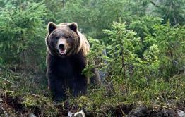 На медведя с голыми руками
