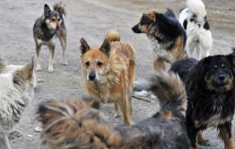 В Атамановке бездомные собаки напали на 3-летнего малыша