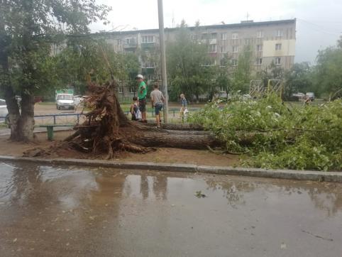 Шквалистый ветер повалил несколько деревьев в Чите