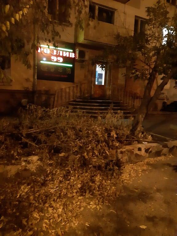 Неизвестные вырубили клены у новой алкоточки на Бабушкина в Чите