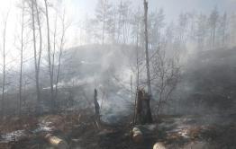 Лес в Атамановке полыхает – пожарных нет, жители тушат его самостоятельно
