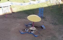 Стая собак напала на 8-летнюю девочку в центре Читы