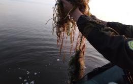 Почти полтора километра рыболовных сетей достали из озер в Забайкалье