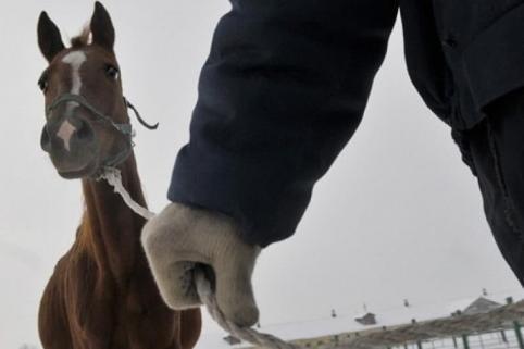 Забайкалец получил срок за убийство человека, воровство КРС и лошадей