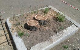 В мкр Северный Читы уничтожают деревья