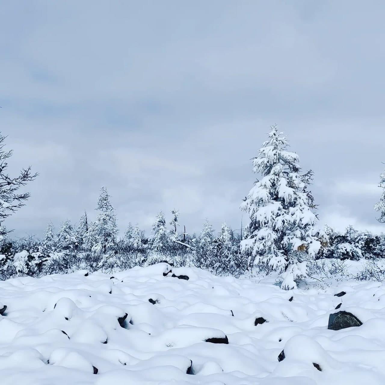 Нежданно-негаданно снег выпал в Каларском районе Забайкалья. Фото: Павел Стрельцов. 24 сентября 2021 год.