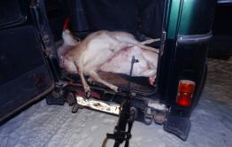Браконьеры убили трех краснокнижных дзеренов в Даурском заповеднике