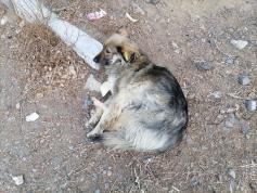 Все-таки есть в Чите чипированные бездомные собаки. ул. Нерчинская, 23.03.2021 г.