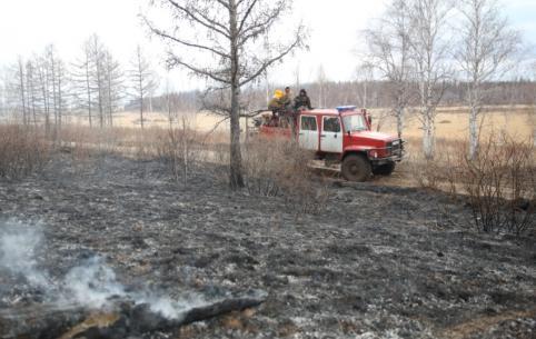 Площадь пожара в «Цасучейском бору» из-за ветра за полдня выросла с 730 до 1090 гектаров