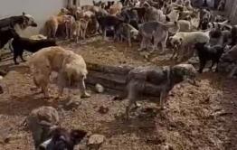 Волонтеры с видео рассказали, что собаки едят друг друга в ИК-3 Читы. Так ли это на самом деле?