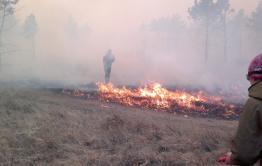 Пожар в заказнике «Цасучейский бор» ликвидирован