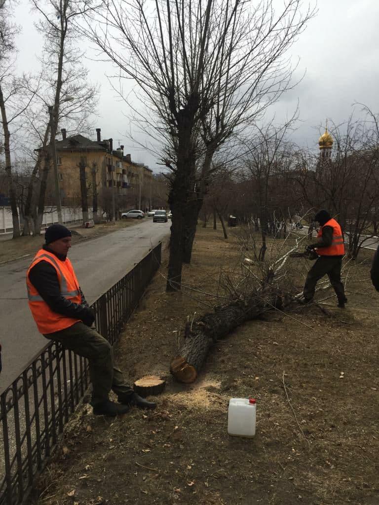 ОНФ обратился в прокуратуру из-за вырубки деревьев в аллее на Горького в Чите