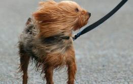 Что нам ветер: гидрометцентр пообещал непогоду в Чите