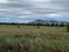 Забайкальские буренки, которых не зарежут на саламат, могут ликовать - сено в этом году уродилось на славу. Село Мангут, Кыринский район, 26 августа