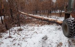 Забайкальцу грозит штраф за незаконную заготовку дров