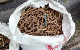 Забайкальца приговорили к штрафу 8,5 млн рублей за добычу краснокнижного растения