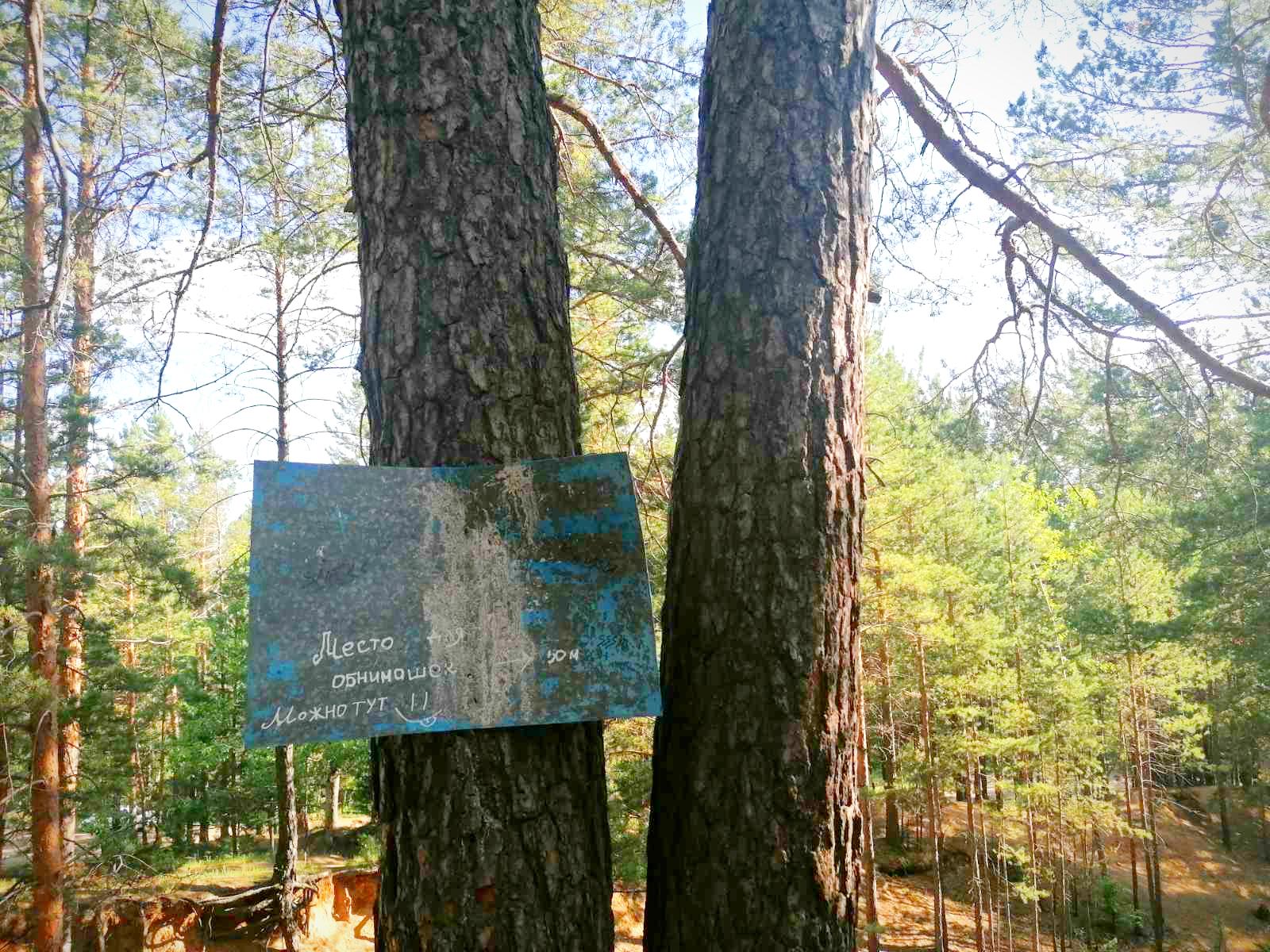Место для обнимашек. В лесу за стадионом СибВО. Обниматься можно в радиусе 50-ти метров. 15 июня 2021 год. Фото «Вечорки».