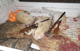 В Борзинском районе задержаны браконьеры на краснокнижных дзеренов
