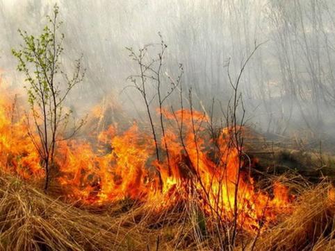 В лесах Забайкальского края ограничили пребывание граждан и транспортных средств