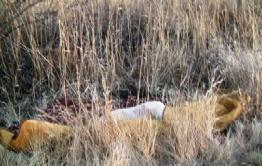 Двое жителей Нерчинска убили мужчину, завернули его труп в ковер, подожгли, затем выкинули в поле