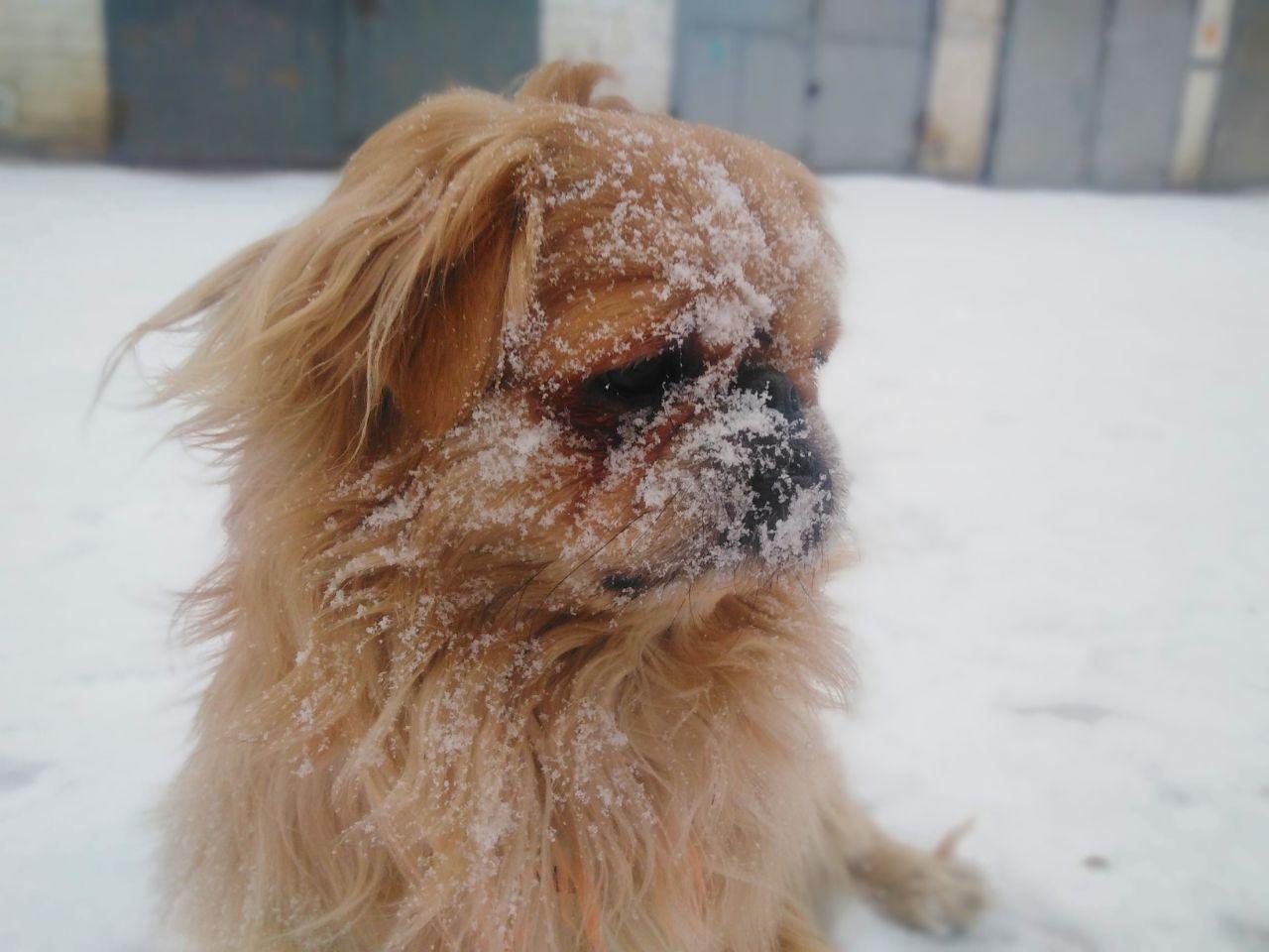 Лёгкий январский снежок в Чите. Фото Эдуарда Петрищева. Чита, улица Балябина. 24 января 2021 год.