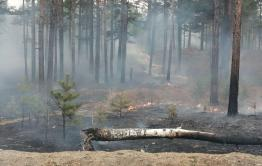 В Забайкалье горит лес в 13 местах