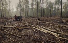 Читинец снес бульдозером больше 200 деревьев в Красночикойском районе