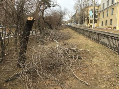 Читинцы пожаловались на вырубку деревьев в аллее на Горького