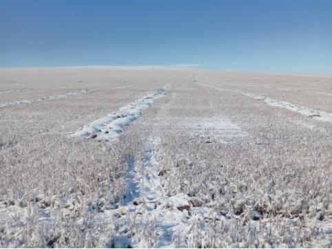 В Забайкалье пострадавшим от осадков аграриям выплатят 142 млн рублей