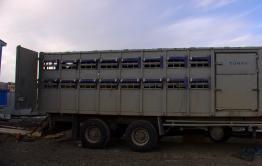 В Забайкалье сотрудники полиции задержали группу людей, воровавших скот