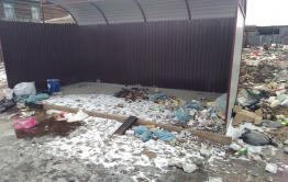 Расплодившиеся на помойке в Чернышевске собаки покусали 8–летнюю девочку