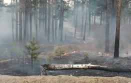 Более 700 человек тушат забайкальские пожары на площади больше 30 тысяч га