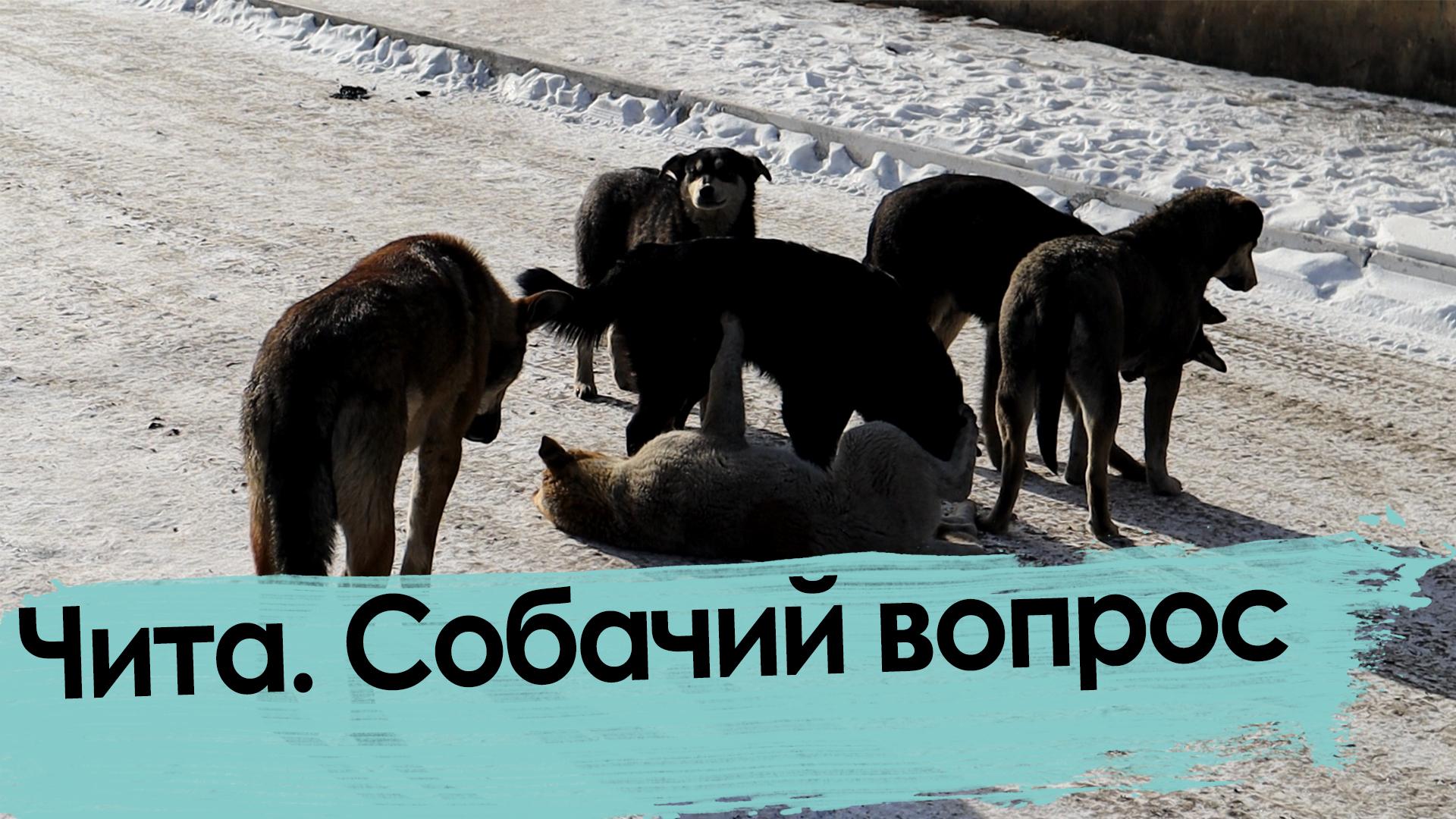 В России могут обязать регистрировать домашних животных